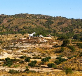 El verano en la Finca / Summer time at the Finca