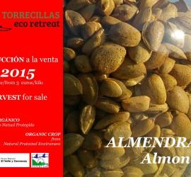 Almendras nuevas  a la venta 2015 New Almonds for sale