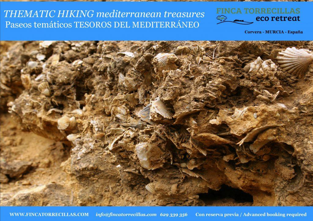 thematic-hiking-marine-fosil