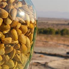ALMENDRAS ORGÁNICAS 2017 Organic Almonds